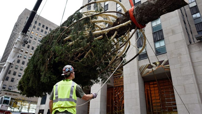 A worker holds a rope attached the Rockefeller Center Christmas tree as the tree is lifted into place. The tree at Rockefeller Center, which this year is a 78-foot tall spruce tree from Gardiner, New York, has been an annual tradition to mark the holiday season since 1933 and will be lit during a ceremony on December 2, 2015.