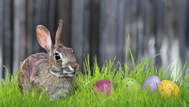 Bunny and Easter eggs in the grass.