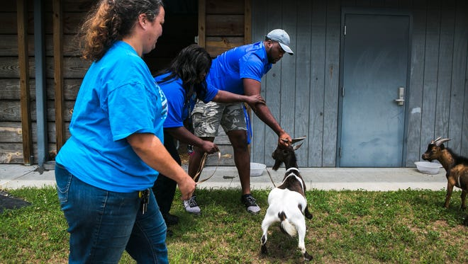 June 24, 2017 - Susan McColpin (left), who's adopting two goats, watches Marandia Benton, an animal control officer for Memphis Animal Services, and Obinna Eze, an offensive lineman for the University of Memphis, catch a goat at the facility on Saturday. U of M's football offensive linemen were acting as adoption counselors at MAS.