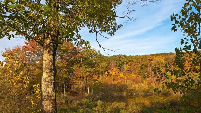 A 90-acre parcel on Illinois Mountain in Lloyd, Ulster County, was conserved by Scenic Hudson in 2015, providing public benefits that include enhanced biological diversity.