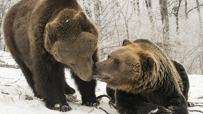 """Two bears share a quiet moment in a scene from """"Seasons."""""""