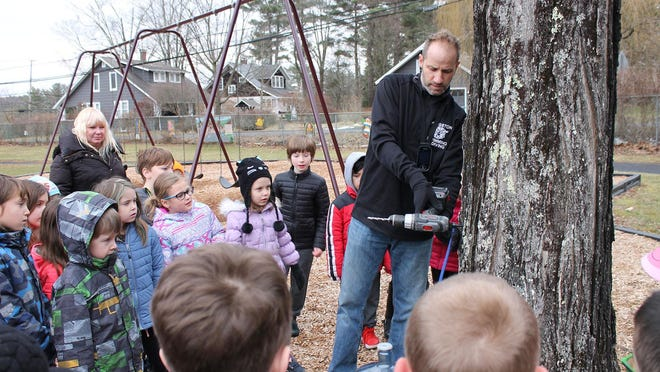 Onteora Physical Education teacher Patrick Burkhardt showing Woodstock Elementary School students how to tap a maple tree to collect its syrup.
