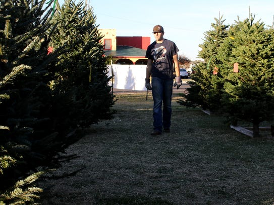 A volunteer walks along the Christmas trees Sunday,