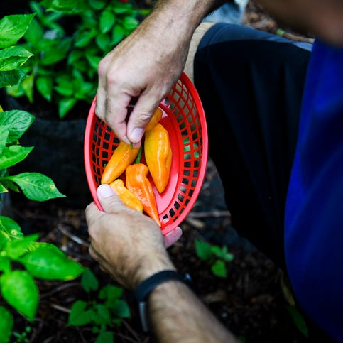 Mauldin man grows hottest peppers in the world. Now they are helping him send his kids to college.