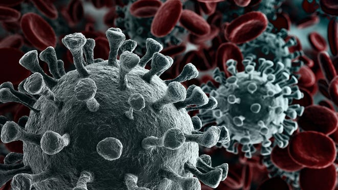 Examples of the COVID-19 coronavirus particles are shown in this artist's rendering.