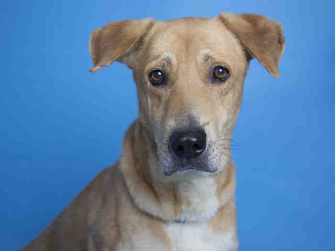 Maricopa County shelters offer free adoptions the rest of ...