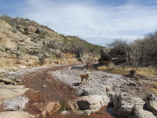 Lulu leads the way by a stream that is so close to the forest of the Sacramento Mountains in Lincoln County, but occupies such a different world near Three Rivers in neighboring Otero County.