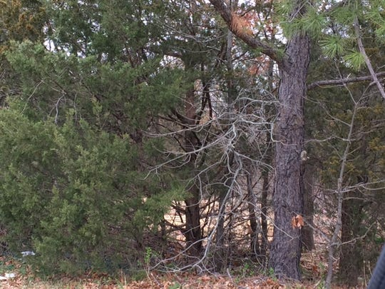 This wooded property off Oak Avenue could be the site