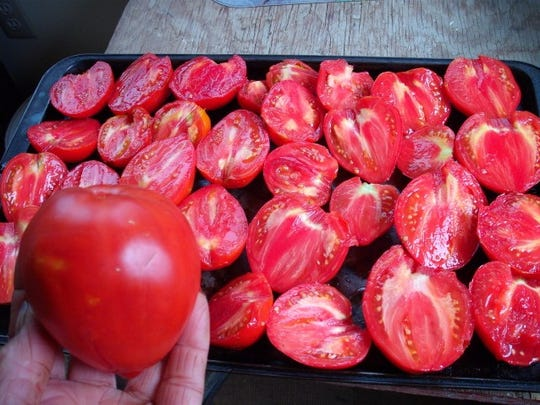 Jory tomatoes are heirloom paste tomatoes.