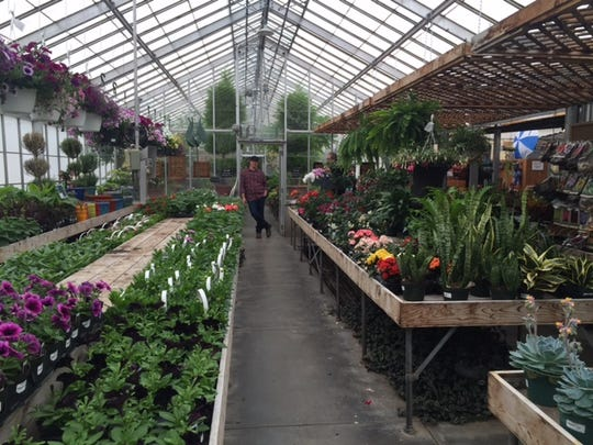Garden Discovery Day will be from 9 a.m. to 3 p.m. Saturday at Kingwood Center Gardens, 50 N. Trimble Road. Doug Schuster of Kingwood stands in the greenhouse where flowers will be on sale.