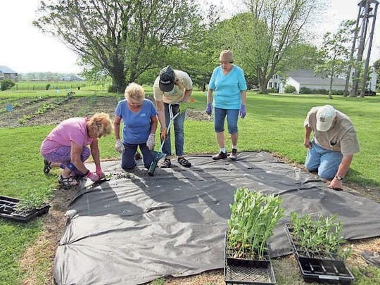 Members of the Homestead Welfare Club planted annual