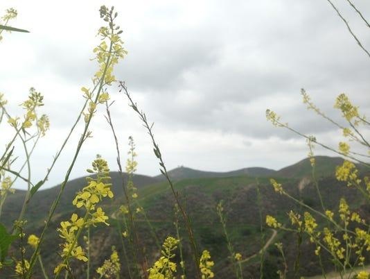 Arroyo Verde