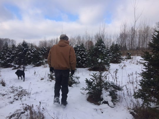 Pourchot and his dog walk through a grouping of trees that has already mostly been cut down this year.