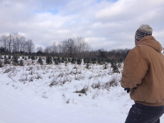 Pourchot looks over a field of trees that was planted in recent years. These trees will be left to grow for several years before they're ready to cut.