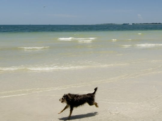 Dogs can frolic on a beach at Fort De Soto Park.