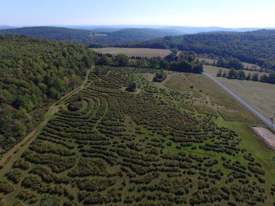 Dennis Marrero owns Bleuet Hill Farm in Deposit.