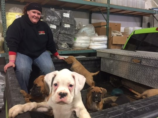 Some of the more than 100 puppies that were rescued from an overturned van on Interstate 86 on Tuesday.