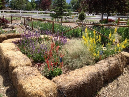 636229461774609986-Native-plant-garden-2-by-Vicki-Bates.JPG