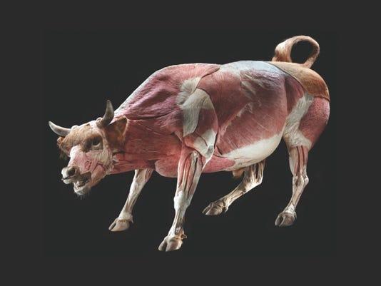 Inside Out Bull