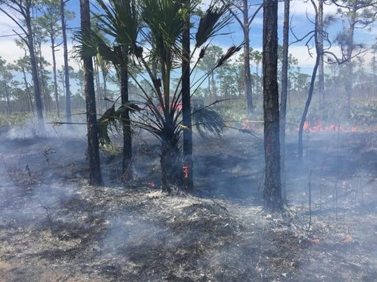 Florida Forest Service and Martin County Fire Rescue crews are battling a 100-acre fire Friday, April 7, 2017, at the west end of Jonathan Dickinson State Park.