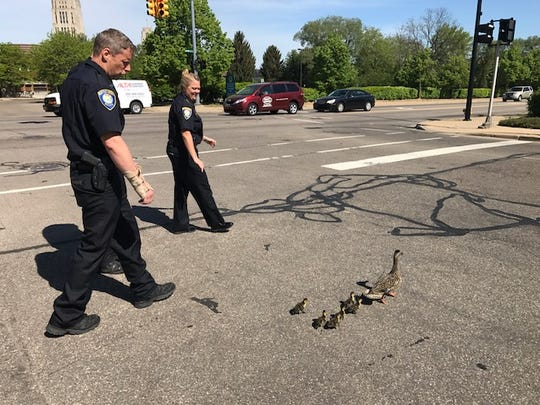 Lt. Matt Robinson and Executive Officer Kathy Schley escort a duck family across State Street Monday.