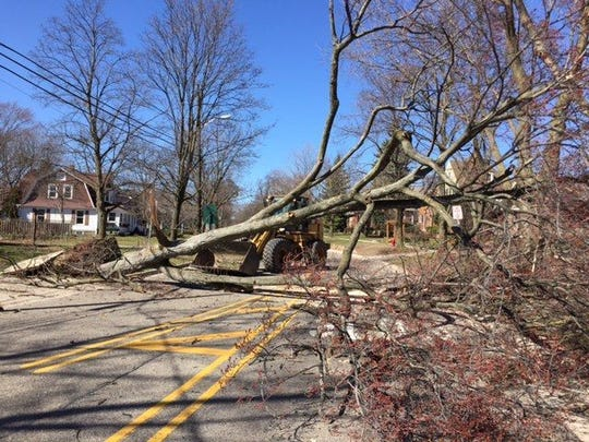 Fallen trees hampered DTE Energy's efforts after a March 8 windstorm, but the company has revealed plans to improve its infrastructure and service reliability.