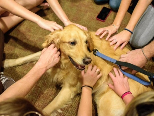 FSU students are eager to pet therapy dog Bella.