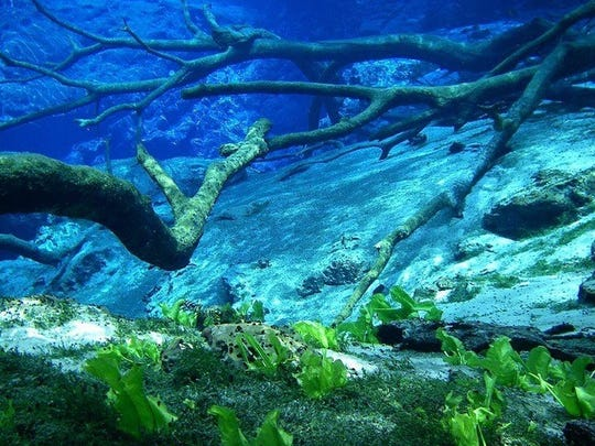 Northwest Fla. offers cool and clear sapphire waters at one of its most alluring destinations, Cypress Springs.