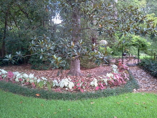Mulch slows down rainwater runoff and the increased