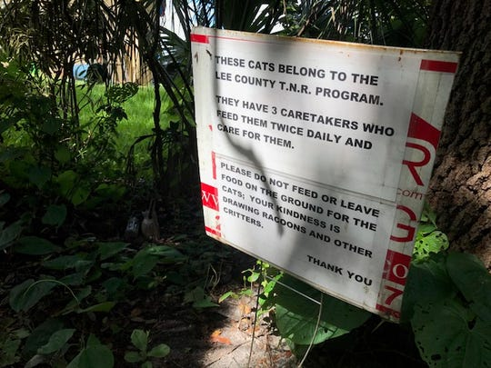 Feral cats in south Lee County are caught, spayed or neutered and then returned  to the site. The practice has made a small dent in the feral cat population, supporters say.