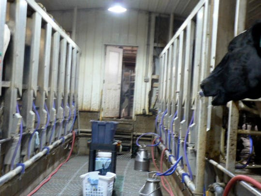 A double eight parlor milks 420 cow three times a day.