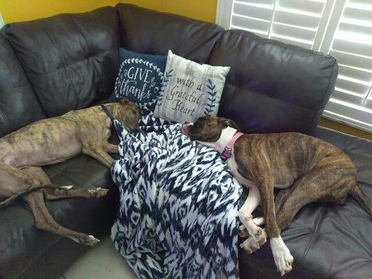 Shelby and Marmaduke share the sofa.