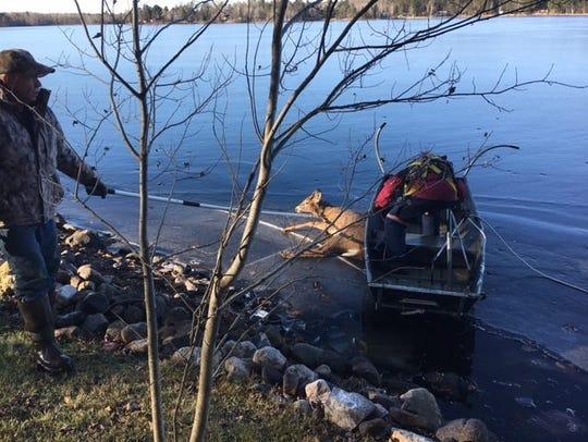 Volunteers help deputies rescue a deer that went through