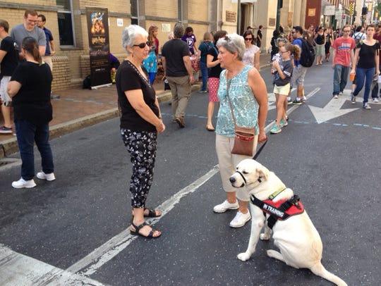 An English yellow Labrador retriever, Daisy lives with
