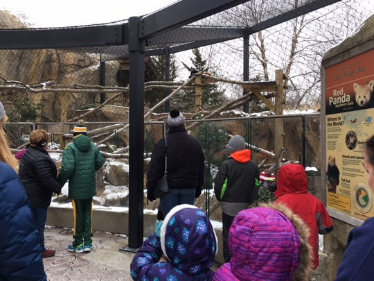 Families at a Milwaukee County Zoo class visit the red panda exhibit.