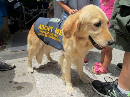 The Doggie Street Festival focuses on pet adoption