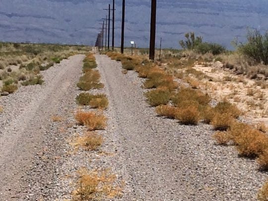 In this picture, the African Rue plants have been chemically treated along a roadway, minimizing the spread of the noxious weed to other parts of the Bar H W Ranch, consisting of mixed land ownership.