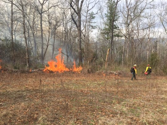 The U.S. Forest Service plans prescribed burns on some 2,000 acres in the Pink Beds area of Pisgah National Forest.