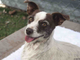 Betty is a 2-year-old terrier mix. She has charmed