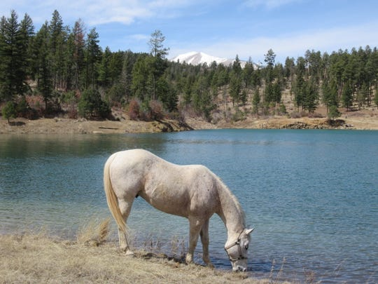 Matthew Midgett's horse Thunder enjoys a drink at Grindstone Lake.