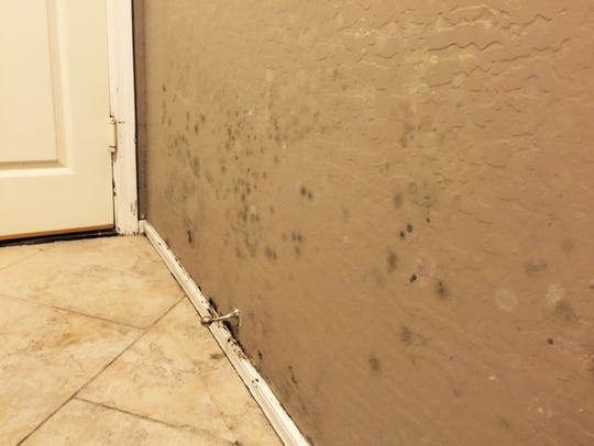 Black mold in a hallway at Kirby and Debora Arnold's