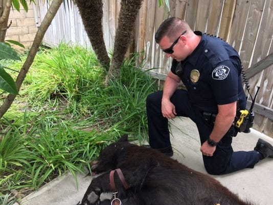 Ventura police officer with bear
