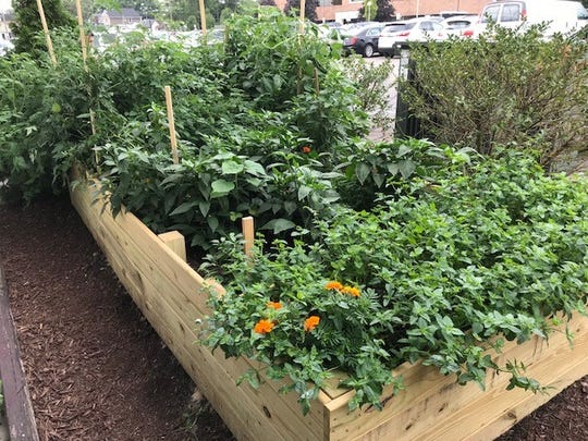 The largest of two gardens at E.G. Nick's is used to grow mint, Thai chili pappers, jalapeno peppers, Egyptian onions, tomatoes and cayenne pepper.