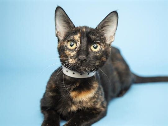 Dana is available for adoption at the Arizona Humane