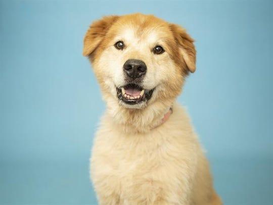 Yoshi is available for adoption atthe Arizona Humane