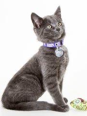 Kiara, 3-month-old female domestic short hair kitten.