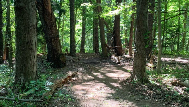 A portion of reclaimed trail is now open at Asbury Woods.