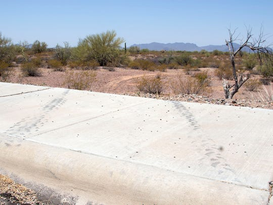 Tire marks run from the sidewalk curb into designated wilderness from the Ajo Mountains Wayside parking lot at Organ Pipe Cactus National Monument in June.
