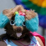 More room and  more fun at the Kentuckiana Pride Festival