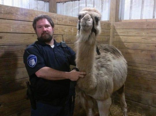 Camel seized 040914